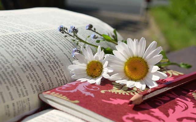 books and daisies